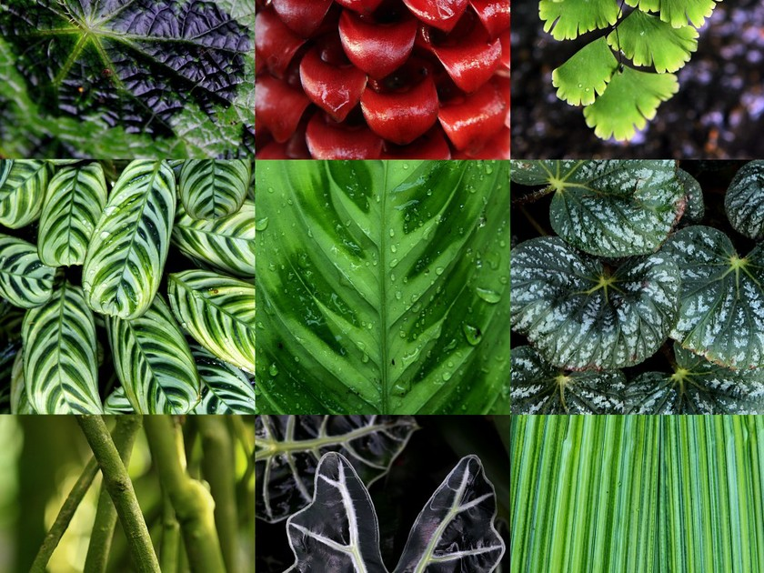 Buying Perennial Plants Online: 3 Handy Tips That Actually Work