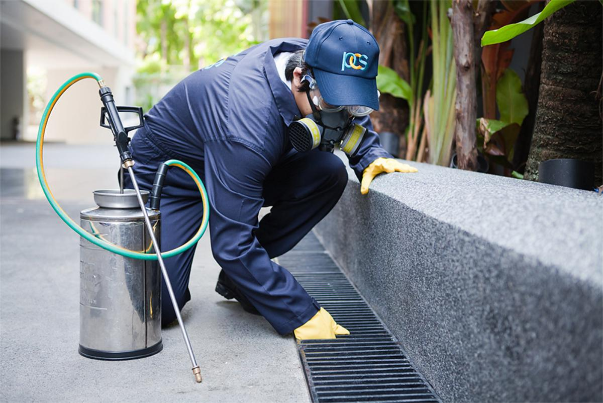 How To Choose The Perfect Pest Control Company?