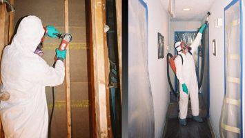 mold-remediation-2-1