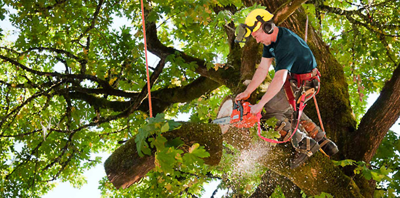 Things To Look For When Hiring Jacksonville Tree Service