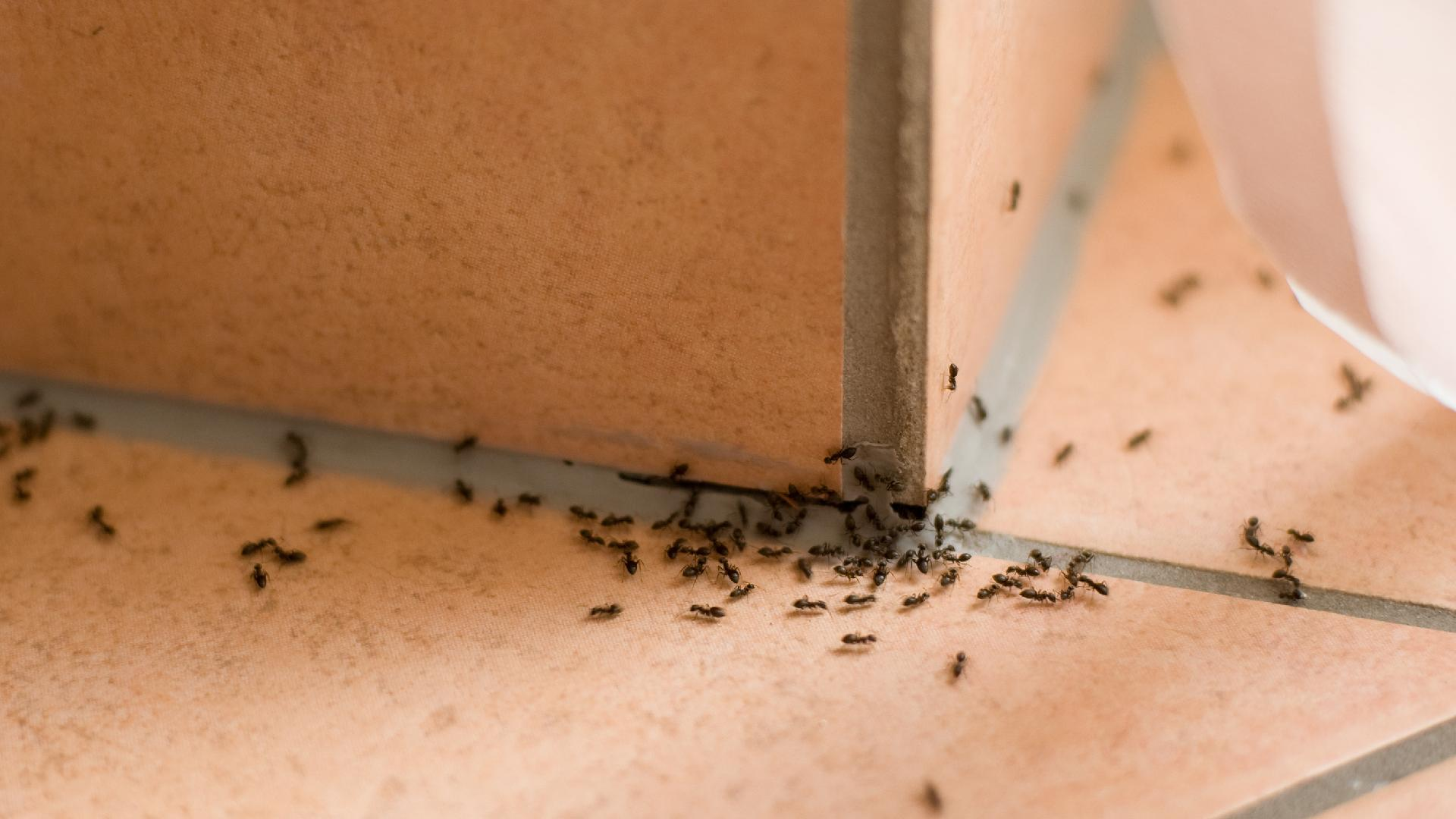 Ways To Keep Ants Out Of Your House