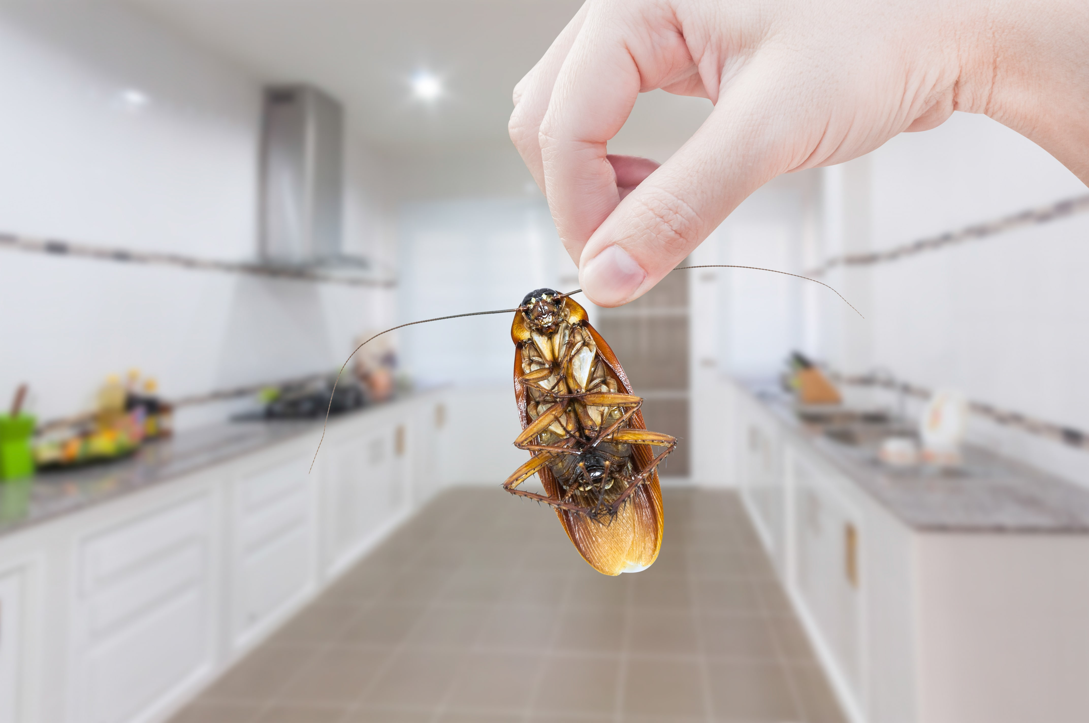 What To Do When Hiring A Pest Control Service