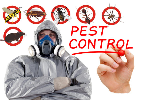 Important Factors To Consider When Hiring Pest Control Company