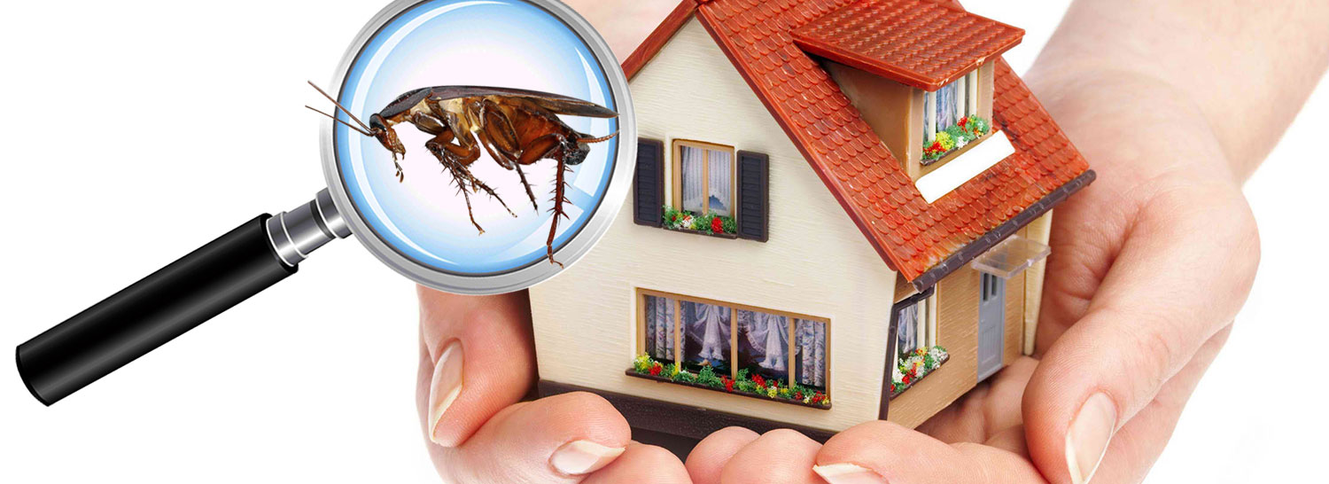 Ways To Hire A Perfect Pest Control Service
