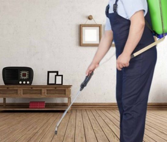 Best Tips To Hire The Right Pest Control Service