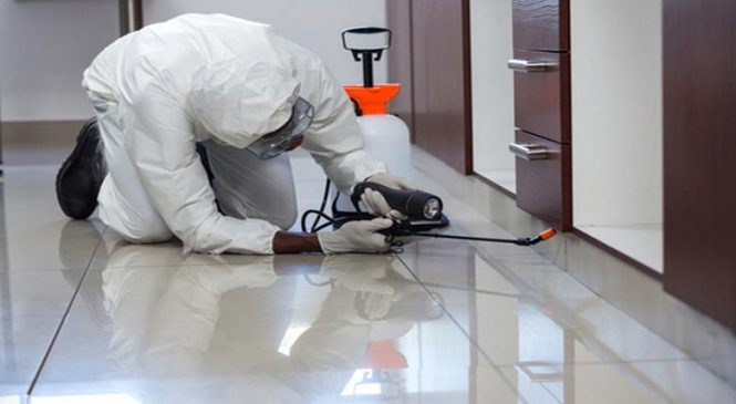 Best Tips To Choose Perfect Pest Control Service