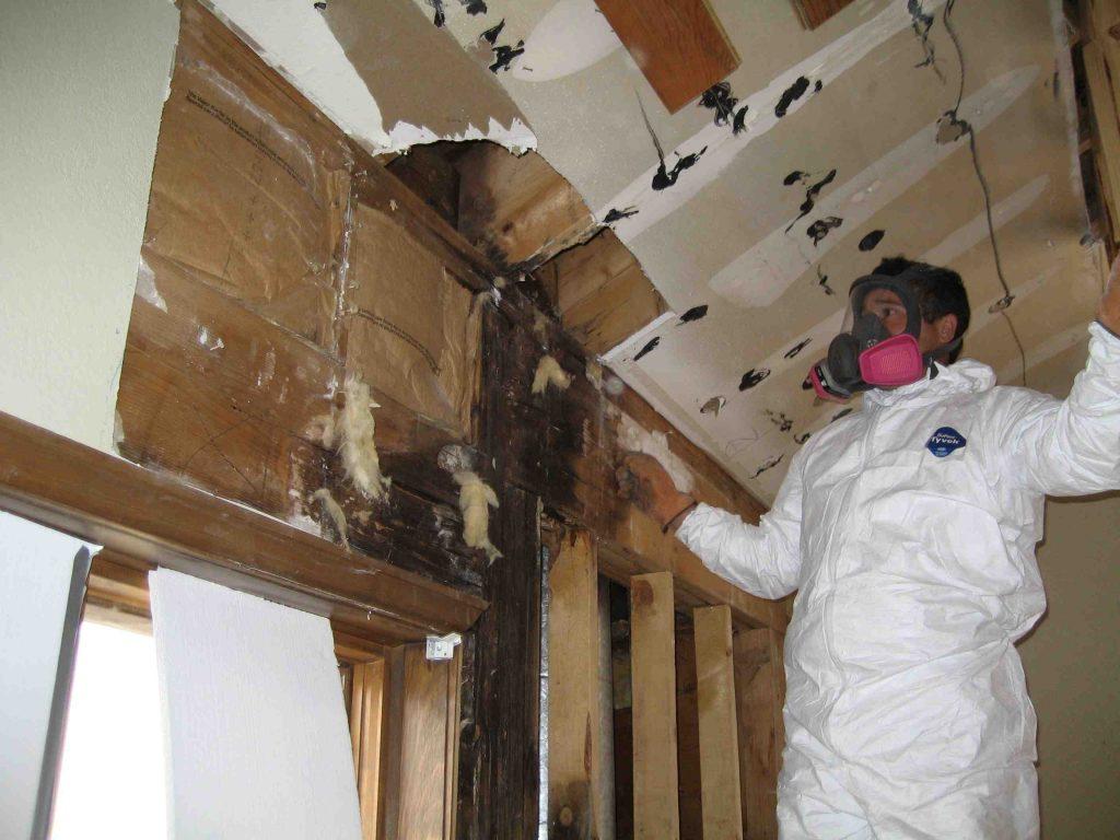 Mold Remediation Services   JW Home Care Restoration