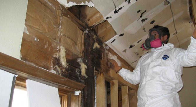 Call Us For The Best Mold Remediation Services Loveland Colorado Can Provide