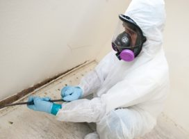 The Most Reputable Mold Remediation Services Highlands Ranch Colorado