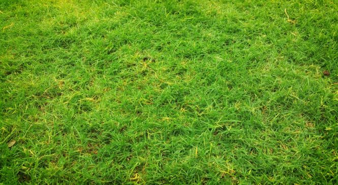 Signs You've Overfertilized Your Lawn And How To Fix It