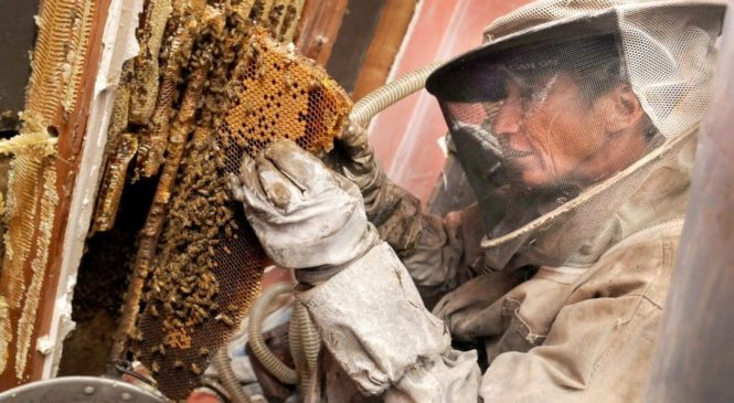 Why Is It Essential to Control or Eliminate Bees?